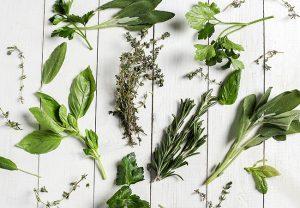 ayurvedic-herbs-madicine
